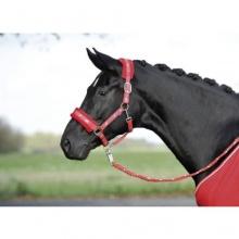 Busse Halfter Silverhorse WB rot Bild 1