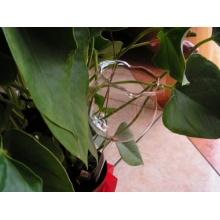 6 große Durstkugeln / Bewässerungskugeln, 8cm, mundgeblasen Lauscha Bild 1