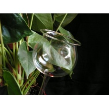 3 Stück Durstkugeln / Bewässerungskugel glasklar, ca. 8cm, Lauscha. Bild 1