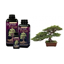 Bonsai Focus 100ml,Bonsaidünger von Growth Technology Bild 1