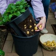 PotatoPot, Anzuchtset von TOM-GARTEN Bild 1
