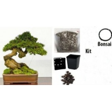 Grow Your Secret Garden Bonsai Anzuchtset Bild 1