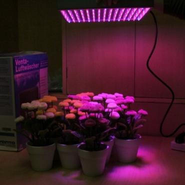Golden Tulip Pflanzenlampe 225 LEDs 15W 26227B Bild 1