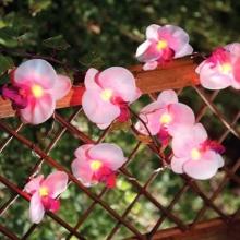 Solar Lichterkette Orchidee 12 Blüten von SOLALUX Bild 1